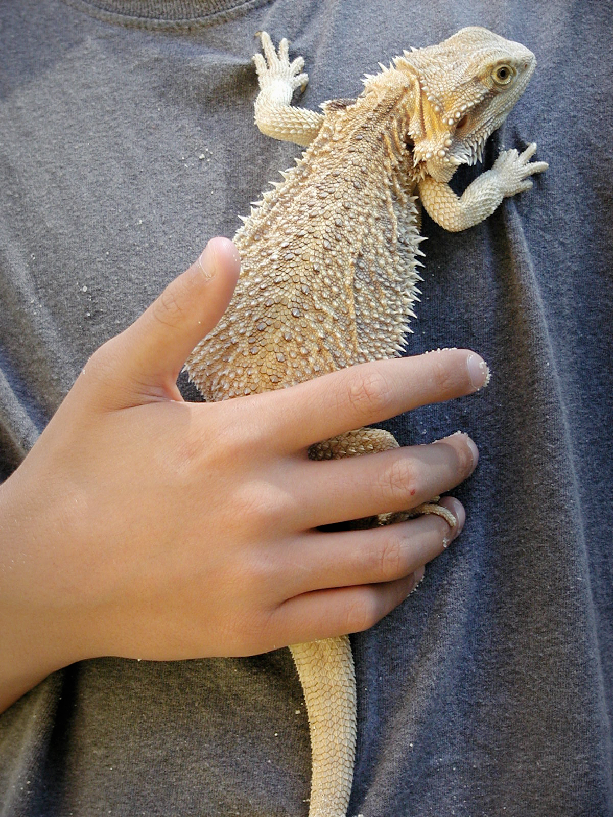 boy holding a bearded dragon