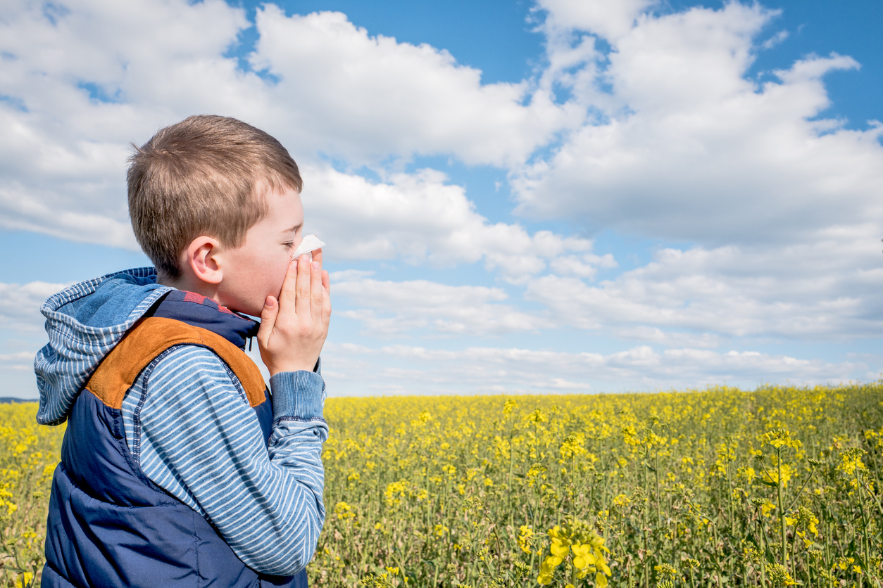 Little boy in yellow canola field blowing his nose and suffering from pollen allergy.